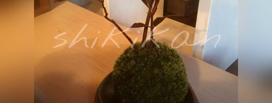 植物工房四季館Yahoo!店