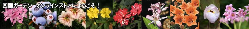 山野草・趣味の植物