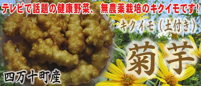 菊芋(キクイモ)