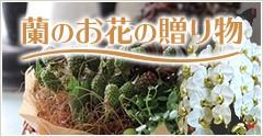 蘭のお花の贈り物
