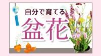 盆花・お供え花