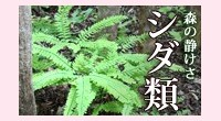 シダ植物一覧