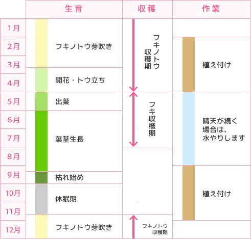 フキの生長カレンダー