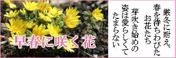 早春に咲く花