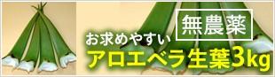 お求めやすい無農薬アロエベラ生葉3kg