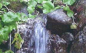 天然水(秩父の天然湧水)