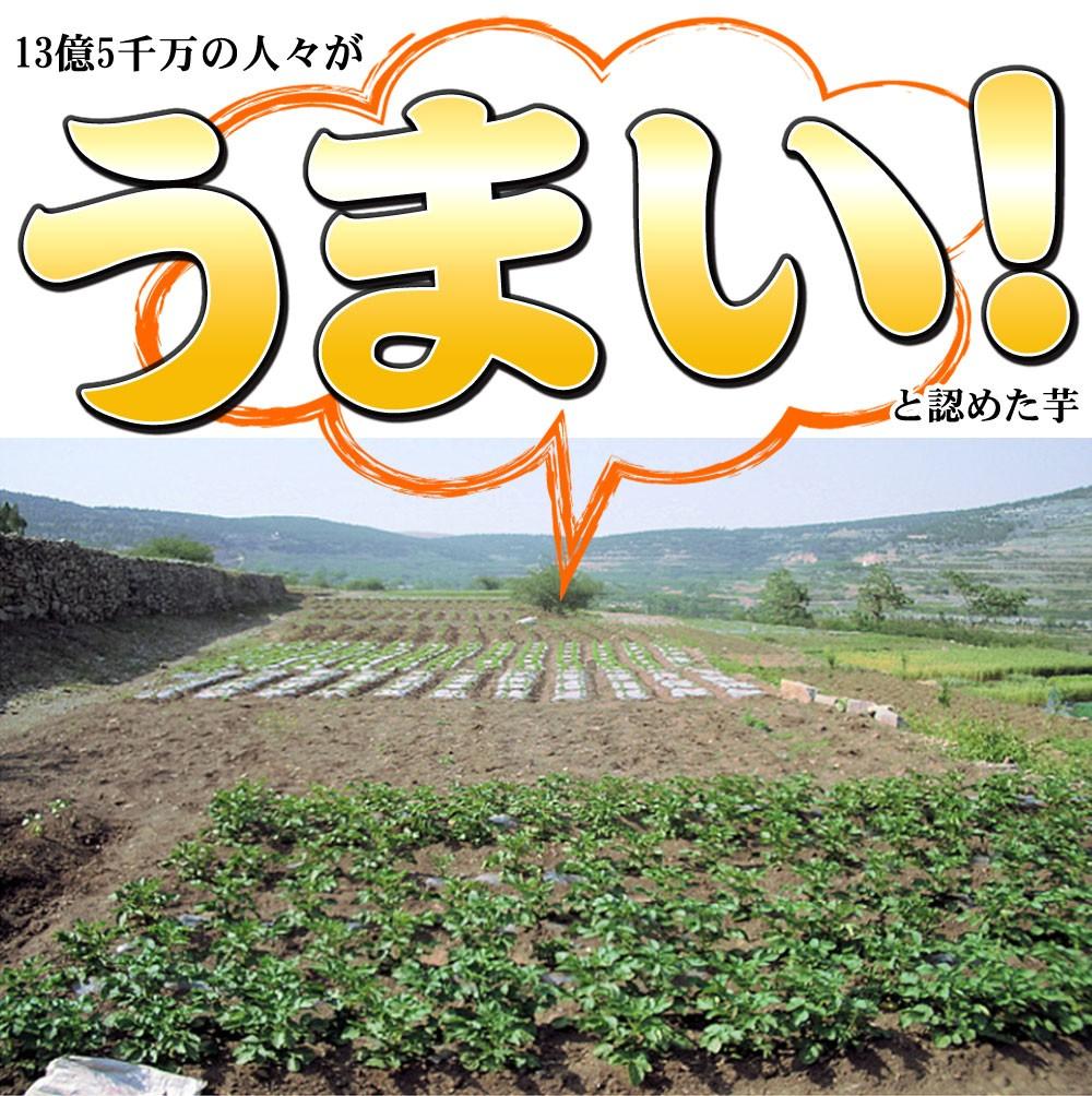 中国山東省の契約農家が育てた芋