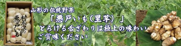 山形伝統野菜 「里芋」