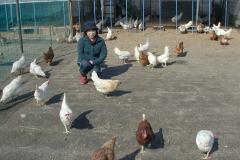 鶏舎の様子