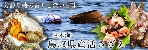 日本海鳥取漁港 鳥取県産活さざえ