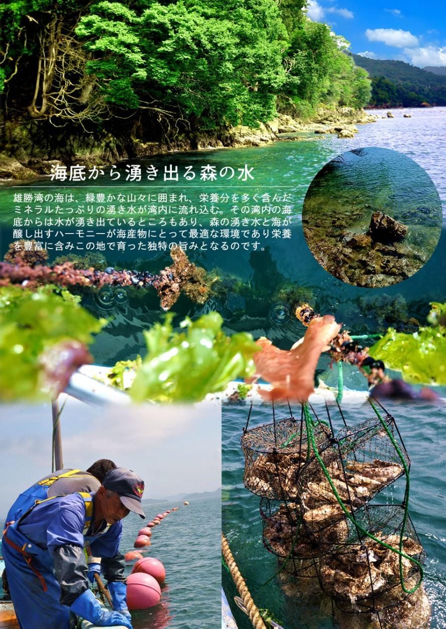 海遊 生牡蠣 宮城県石巻 雄勝湾 カキ漁師