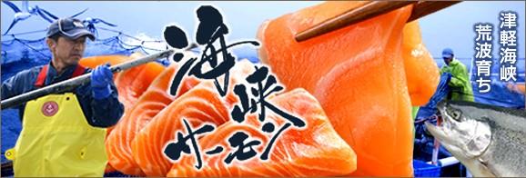 青森県八戸市 津軽海峡 トラウトサーモン