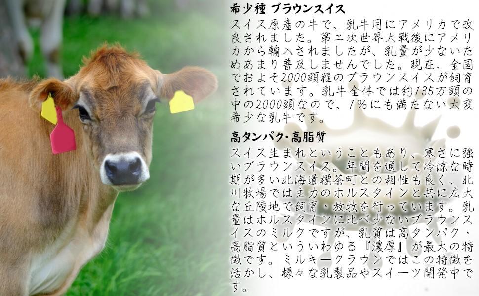 希少種 ブラウンスイススイス原産の牛で、乳牛用にアメリカで改良されました。第二次世界大戦後にアメリカから輸入されましたが、乳量が少なくあまり普及しませんでした。現在、全国でおよそ2000頭程のブラウンスイスが飼育されています。乳牛全体では135万頭の中の2000頭なので、1%にも満たない大変希少な乳牛です。高タンパク・高脂質スイス生まれということもあり、寒さに強いブラウンスイス。年間を通して冷涼な時期が多い北海道標茶町との相性も良く、北川牧場では主力のホルスタインと共に広大な丘陵地で飼育・放牧を行っています。乳量はホルスタインに比べ少ないブラウンスイスのミルクですが、乳質は高タンパク・高脂質といういわゆる『濃厚』が最大の特徴です。ミルキークラウンではこの特徴を活かし、様々な乳製品やスイーツ開発中です。