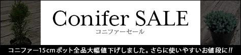 Conifer SALE!さらに使いやすいお値段に!コニファー15cmポット全品大幅値下げしました。