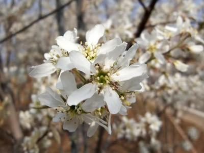 春:花が美しい