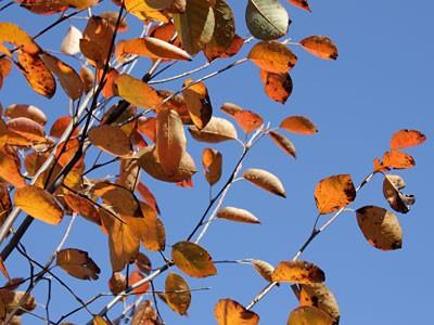秋:紅葉が綺麗