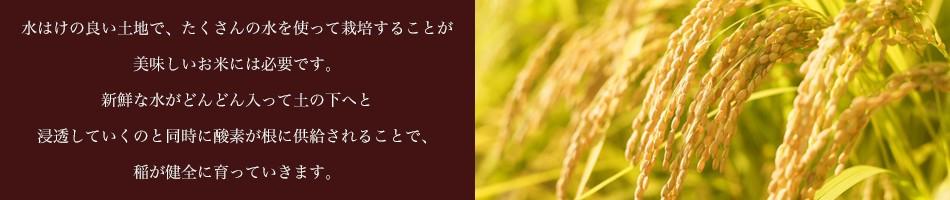 水はけの良い土地で、たくさんの水を使って栽培することが 美味しいお米には必要です。 新鮮な水がどんどん入って土の下へと 浸透していくのと同時に酸素が根に供給されることで、稲が健全に育っていきます。