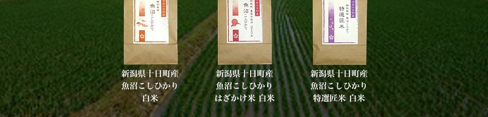 新潟県魚沼産