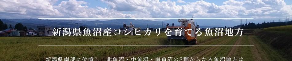 新潟県魚沼産コシヒカリを育てる魚沼地方