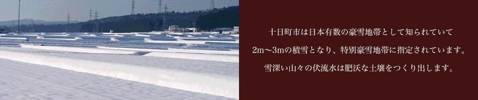 十日町市は日本有数の豪雪地帯として知られていて2m〜3mの積雪となり、特別豪雪地帯に指定されています。 雪深い山々の伏流水は肥沃な土壌をつくり出します。