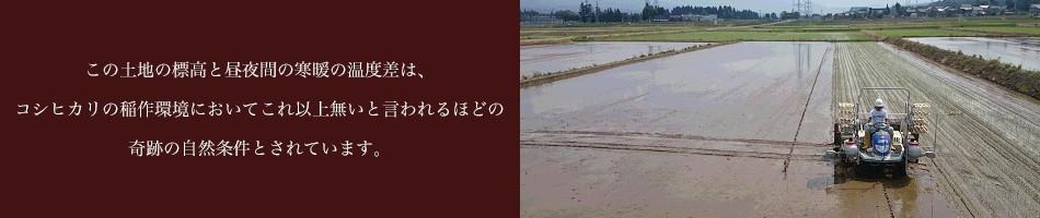 この土地の標高と昼夜間の寒暖の温度差は、コシヒカリの稲作環境においてこれ以上無いと言われるほどの 奇跡の自然条件とされています。