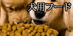 犬用フード