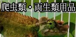 爬虫類・両生類用品