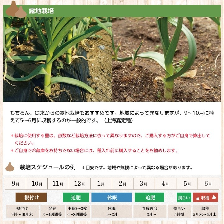 露地栽培について