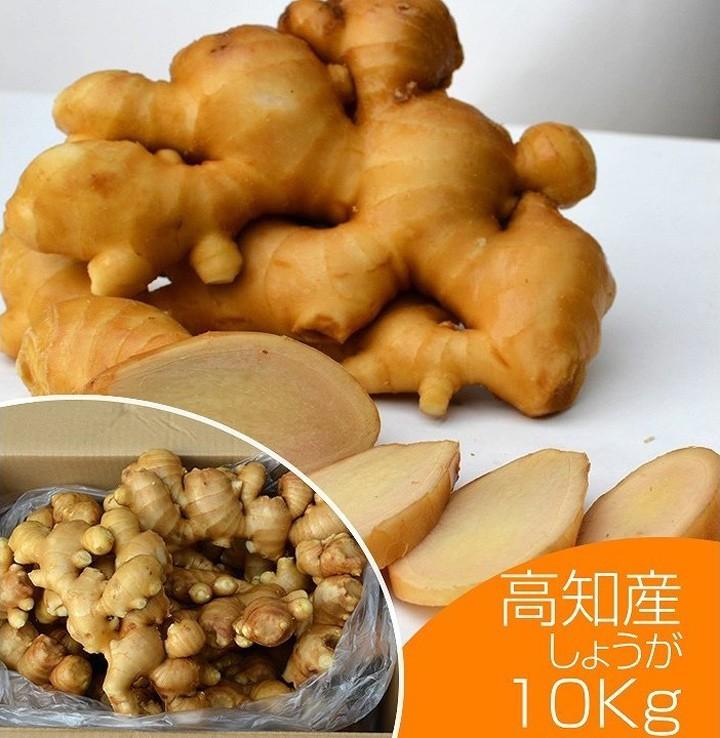 高知県産土佐一10kg