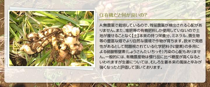 有機だと何がいいの?A:無農薬で栽培しているので、残留農薬が検出される心配がありません。また、堆肥等の有機肥料しか使用していないので土地が痩せることなく【土】本来の持つ栄養分、ミネラル、微生物等の豊富な畑でより自然な環境で作物が育ちます。欧米で発癌性があるとして問題視されている化学肥料(N:窒素)の多用による硝酸態窒素(しょうさんたいちっそ)汚染の心配もありません。一般的には、有機農産物は慣行品に比べ糖度が高くなるといわれますが生姜については、むしろ生姜本来の風味と辛みが強くなったと評価して頂いております。