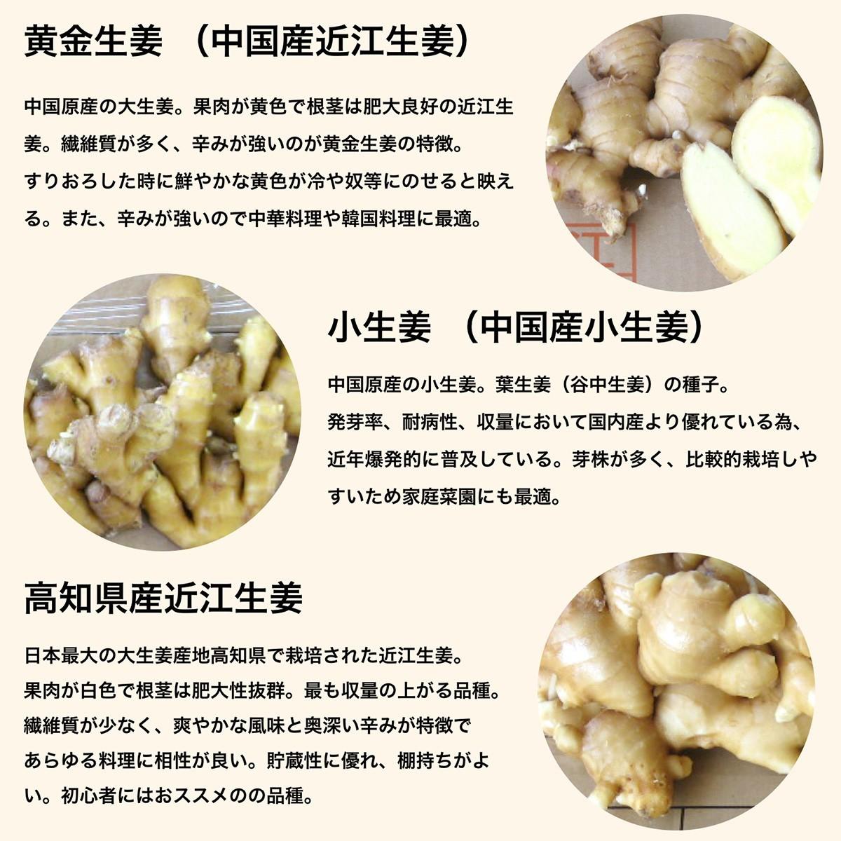 黄金生姜 (中国産近江生姜):中国原産の大生姜。果肉が黄色で根茎は肥大良好の近江生姜。繊維質が多く、辛みが強いのが黄金生姜の特徴。すりおろした時に鮮やかな黄色が冷や奴等にのせると映える。また、辛みが強いので中華料理や韓国料理に最適。;小生姜 (中国産小生姜):中国原産の小生姜。葉生姜(谷中生姜)の種子。発芽率、耐病性、収量において国内産より優れている為、近年爆発的に普及している。芽株が多く、比較的栽培しやすいため家庭菜園にも最適。 ;完熟種生姜 (タイ産近江生姜):品種は近江生姜の白。11月の収穫期に再度土寄せを行い、穂が倒れた後も圃場で翌年2月まで追熟させた種子用近江生姜です。完熟しているので果肉は灰色っぽく、硬く、やや乾燥気味です。完熟種子は、発芽後の生育に差が出ます。;高知県産近江生姜:日本最大の大生姜産地高知県で栽培された近江生姜。果肉が白色で根茎は肥大性抜群。最も収量の上がる品種。繊維質が少なく、爽やかな風味と奥深い辛みが特徴であらゆる料理に相性が良い。貯蔵性に優れ、棚持ちがよい。初心者にはおススメのの品種。;千葉県産近江生姜:千葉県の北総台地(成田・富里・八街・山武地区)で栽培された大生姜。果肉が白色で根茎は肥大良好の近江生姜。比較的繊維質が少なく、マイルドで上品な辛みで風味は強い。酢漬けにすると自然な薄いピンクに染まるので、新生姜で使用するガリや日本料理に最適な品種。;千葉県産三州生姜:千葉県の北総台地(成田・富里・八街・山武地区)で栽培された小生姜。年々栽培面積が減少し希少価値の高い純国産の三州生姜。白芽の葉生姜(谷中生姜)の種子。;千葉県産金時生姜:赤芽、小生姜。日本独自の品種で希少価値の高い生姜。三州生姜と比べてもやや小ぶりで、香りと辛味が大変強いのが特徴。香りの成分ガラノラクトン、辛味成分ショーガオール、ジンゲロールが一般の生姜の4倍以上含まれている。矢生姜(はじかみ)や粉末生姜にてきした品種。