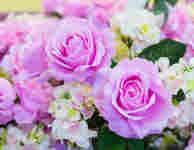 バラを育てる培養土シリーズ
