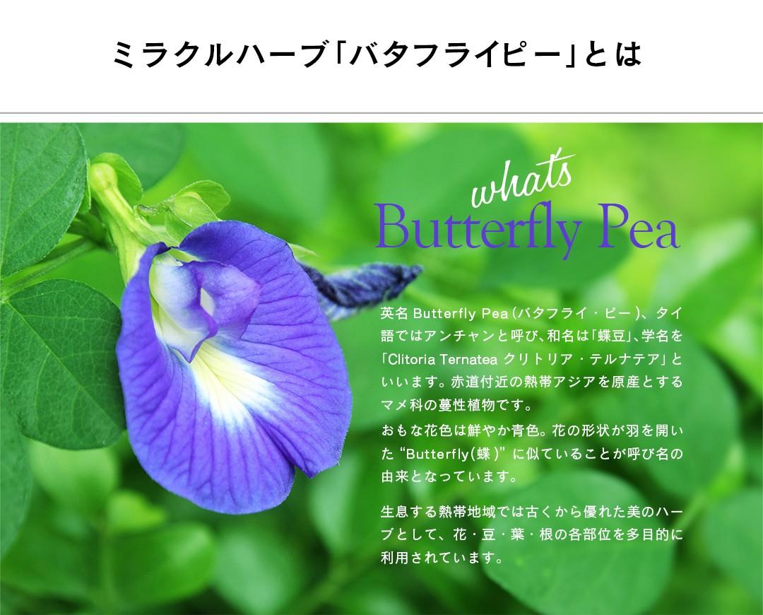 <ミラクルハーブ「バタフライピー」とは>英名Butterf ly Pea(バタフライ・ピー)、タイ語ではアンチャンと呼び、和名は「蝶豆」、学名を「Clitoria Ternatea クリトリア・テルナテア」といいます。 赤道付近の熱帯アジアを原産とするマメ科の蔓性植物です。