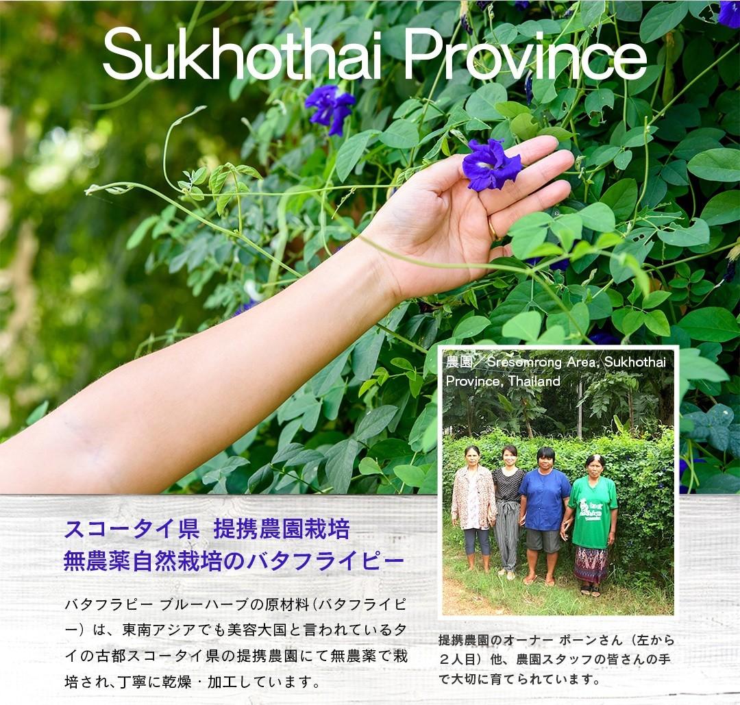 スコータイ県  提携農園栽培無農薬自然栽培のバタフライピー。バタフラピー ブルーハーブの原材料(バタフライピー)は、タイの古都スコータイ県の提携農園にて無農薬で栽培され、丁寧に乾燥・加工しています。