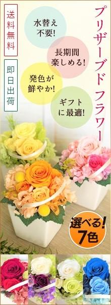 生花とは異なる発色が鮮やか☆プリザーブドフラワー選べる7色