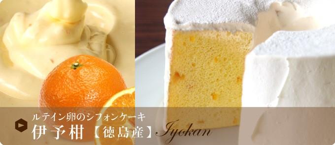 ルテイン卵のシフォンケーキ 伊予柑