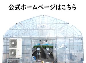 夏イチゴ農園の公式ホームページ