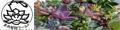 多肉植物ワールド ロゴ