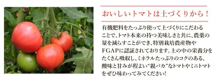 親バカトマト 助川農園