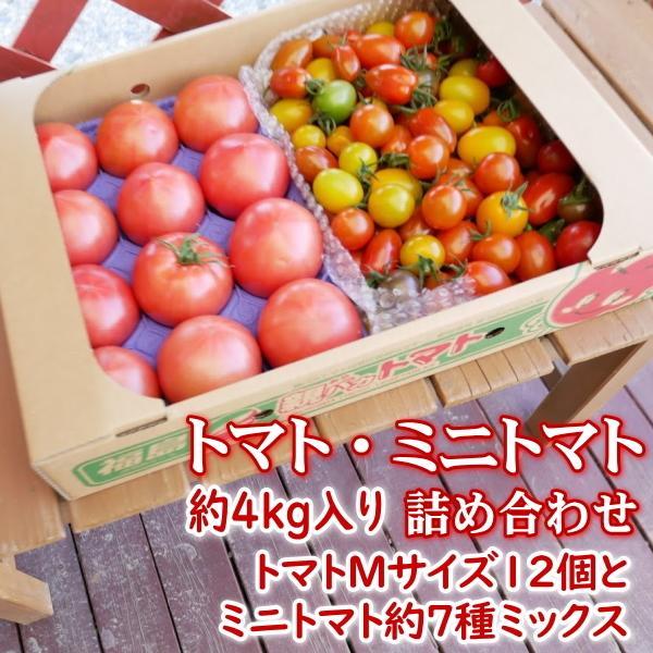 親バカトマトとミニトマトの詰め合わせ 約4kg いわき市産 選べるミニ suketoma 19