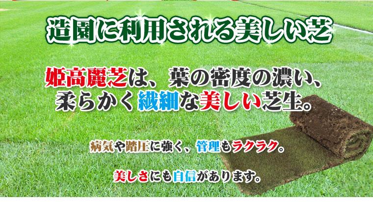 手軽に芝を楽しみたい方に。高麗芝は、日本で広く使用されるポピュラーな芝生。ゴルフ場のフェアウェイや公園の緑化用に用いられています。