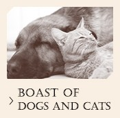 Boast of dogs and cats