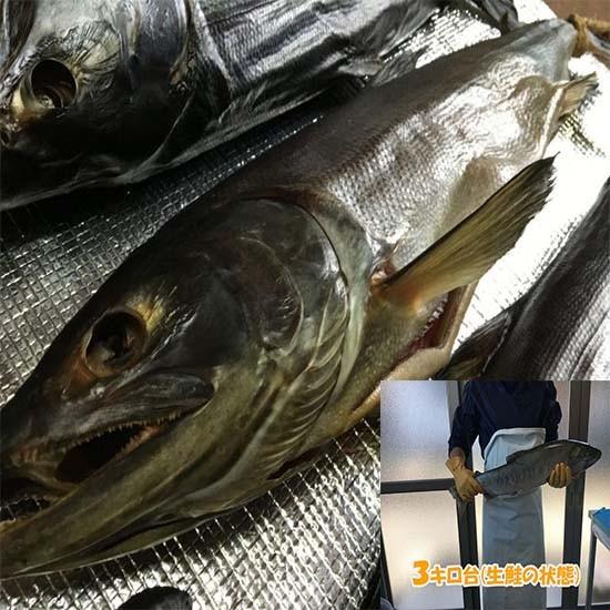 塩引き鮭3キロ大きさの目安