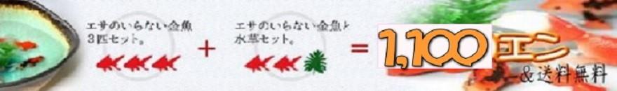 1100円&送料無料