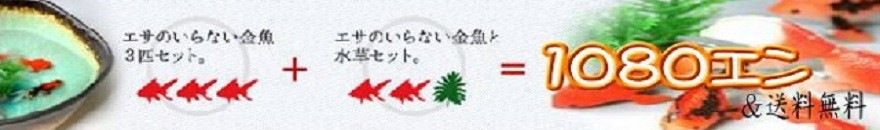 1080円&送料無料