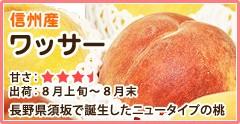 信州産 ワッサー 長野県須坂で誕生したニュータイプの桃