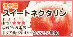 信州産 スイートネクタリン 甘くて食べやすい「ネクタリン革命」