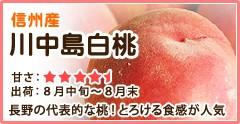 信州産 川中島白桃 長野の代表的な桃! とれける食感が人気