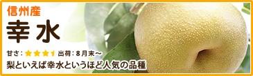 信州産 幸水 梨といえば幸水というほど人気の品種