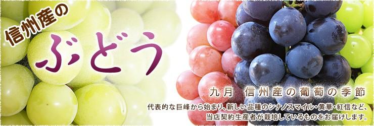 信州産のぶどう 九月 信州産の葡萄の季節